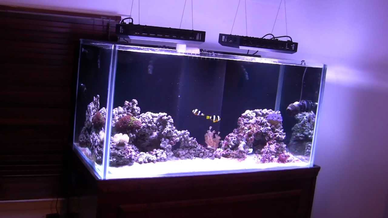 Failsafe questions for you about my 120 gal rimless reef for Aquarium 120