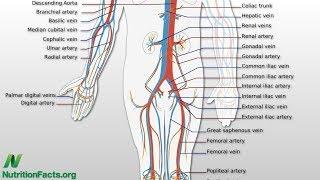 Cholesterol a ženská sexuální dysfunkce