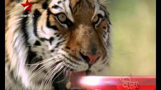 Ranvijay Comes Face To Face With A Tiger