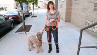 How To Train Your Dog To Walk On Leash - Dog Training