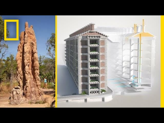 Buildings inspired by Termite Mounds – Inspirational Video