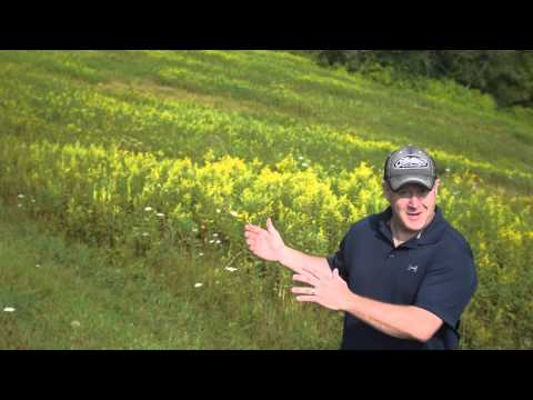 Deer Food Plot Location Strategies