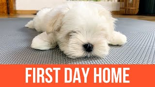 FIRST DAY OF OUR NEW PUPPY  Getting a Maltese  Cute Dog Video