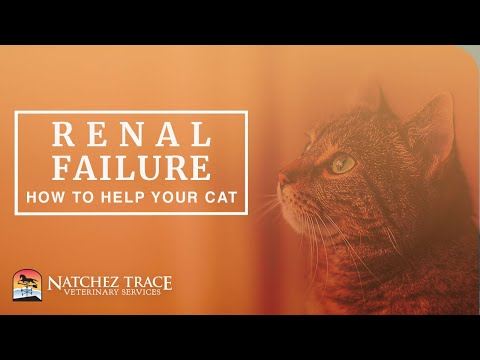 Free Guide! Help Your Cat With Renal Failure - Make Your Cat Feel Better