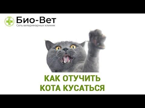 Как отучить кота кусаться за руки и ноги хозяев