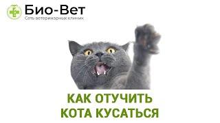 Как отучить кота кусаться. Ветеринарная клиника Био-Вет.