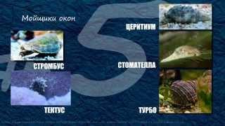 ТОП-10 Санитары морского аквариума