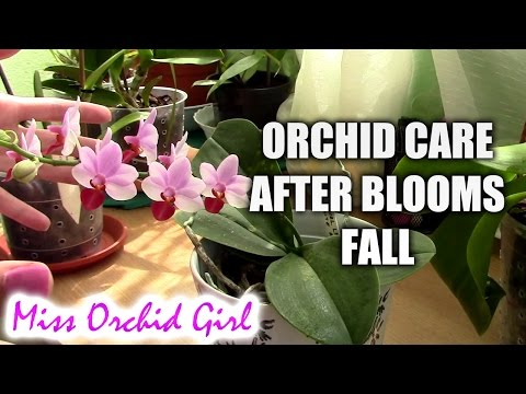 orchid how to cut new spike