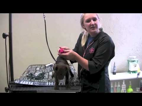 How To Groom A Puppy | Dog Grooming Tips in Buffalo, NY