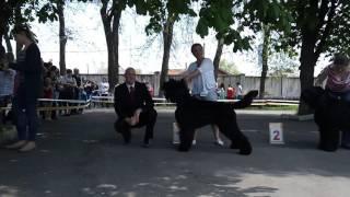 Кривой Рог 2017 Выставка собак Черный Терьер