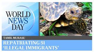 World News Day: Repatriating 51 illegally-smuggled Indian star tortoises   Tamil Murasu