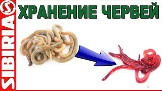 Как хранить червей, как сделать червя красным, хранение опарыша(Небольшой совет по хранению червей и опарышей для рыбалки. Подписывайтесь на канал ▻▻▻http://www.youtube.com/c/SibiriaTV..., 2016-05-14T15:20:26.000Z)