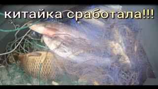 Рыбалка на СЕТИ Сазан Верхогляд