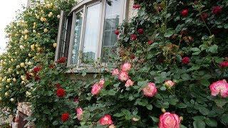 HinaChina バラの庭2016