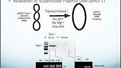 Human Topoisomerase I Assay Kit:  Application and Use