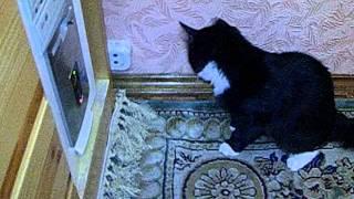 Кошка дергается ^о^