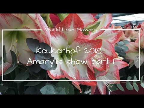 Keukenhof 2018 - Amaryllis show part I