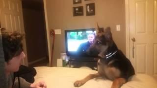 German Shepherd Tries To Talk