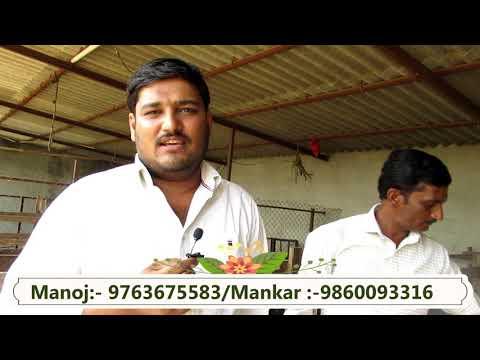 Beetal For Sales At Sky Goat Club  स्काय शेळ्या क्लब येथे विक्रीसाठी बीटल Hindi