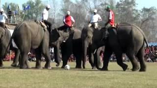 Download Video Elephant Festival Nepal. Sauraha, Chitwan 2014 MP3 3GP MP4