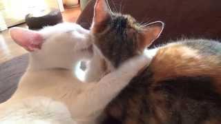 Jak opiekują się koty sobą nawzajem.