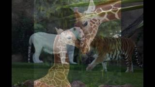 дикие животные нашего мира