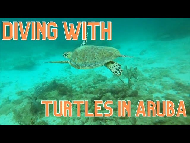 ARUBA TURTLES, WRECKS, LIONFISH DIVING WITH THE KELLY FAMILY 2020