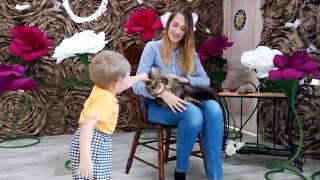 Чеширский кот! /Морда на выезде/ фотостудия