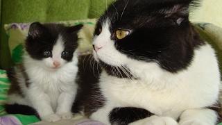 Заботливый кот и непослушный котенок