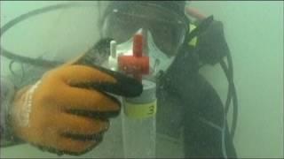 euronews science - Жизнь в Мертвом море?