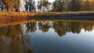 КАРАСЬ НА КАЖДОМ ЗАБРОСЕ | Ловля Карася На Поплавочную Удочку | Попытка Поймать ТОЛСТОЛОБА