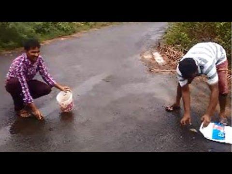 Fish Rain On Mumbai Pune Expressway,know Truth Behind It | वनइंडिया हिन्दी
