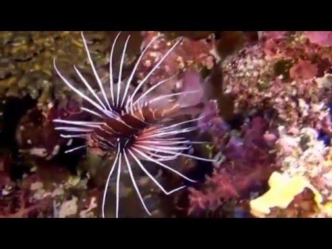 Коралловый риф красного моря(Египет)