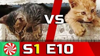 Funny Cat Videos for Kids | S1-EP10 | Ninja Cats 2 || Capture Candy Kids TV