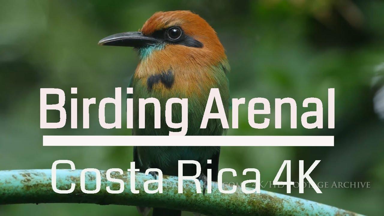 Birding  Arenal Volcano National Park, Costa Rica