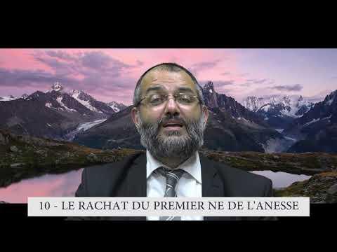 613 Mitsvot - 10eme Commandement DE LA TORAH - Rachat du premier né de l'ânesse  - Rav Ilan Fitoussi