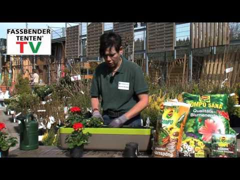 Fassbender-Tenten Ratgeber: Zeit für Balkonpflanzen
