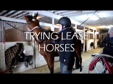 Trying Lease Horses | Show Season 2018
