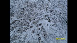 Фото природа  зима.