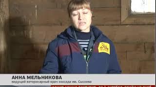 Дом для лосят. Новости 20/09/2019. GuberniaTV