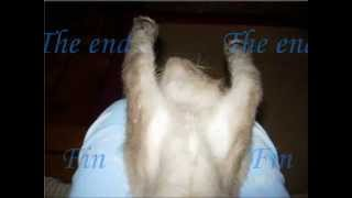 Animales graciosos-Gatos Funny animals-Cats