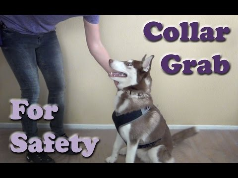 Collar Grab For Safety - Dog Training