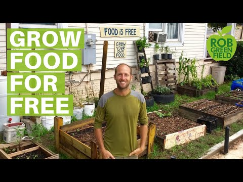 How to Grow Food for Free in the City