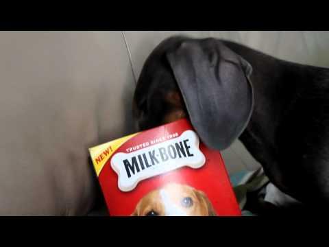 funny-dog---the-milkbone-burglar
