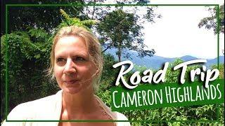 VLOG Kuala Lumpur to Cameron Highlands by Car | Expat Travel Malaysia