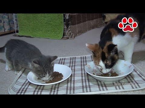 ご飯と雨合羽が怖い猫達 Cat meal and cats scared of raincoats