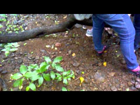 monsoon trail at bnhs (bombay natural history society) reserve