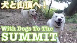 今日はお友達の北海道犬、五郎ちゃんと待ち合わせて鍋蓋山頂(485m)ま...