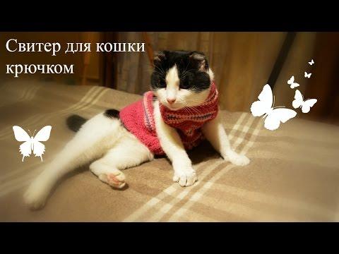 Как связать шлейку для кошки крючком