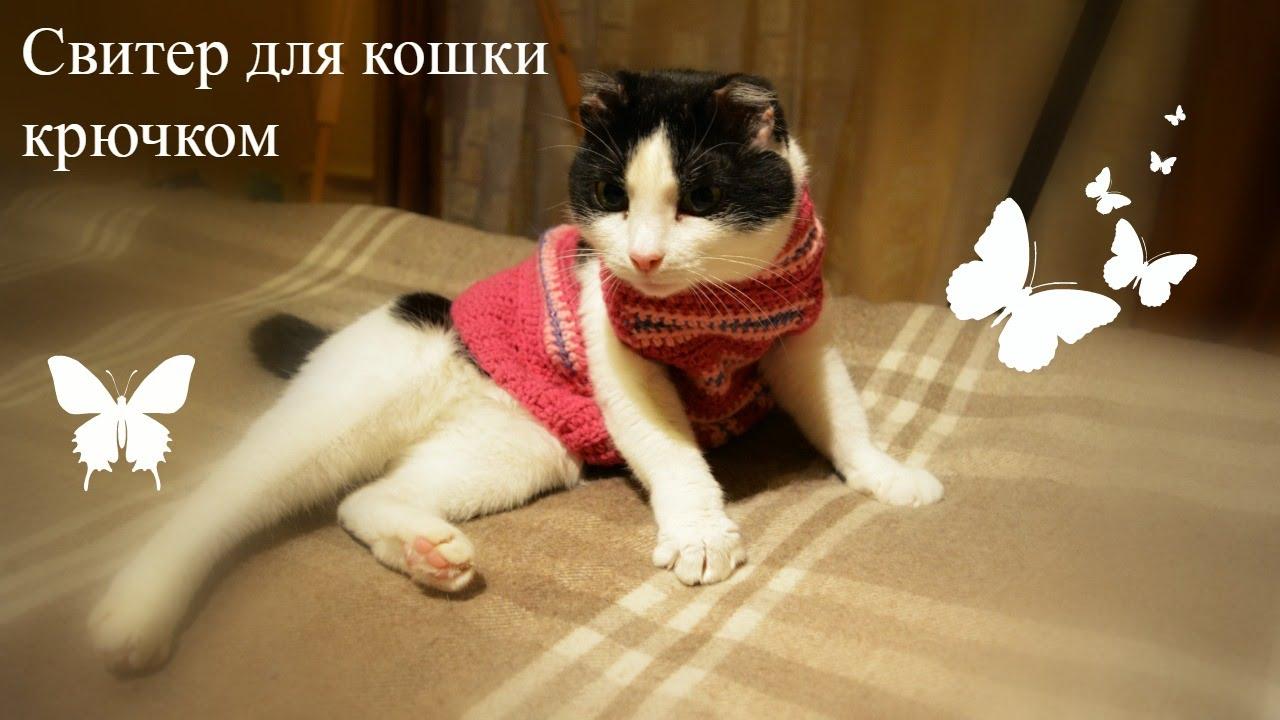 свитер для кошки крючком Crochet Sweater For Cat Youtube